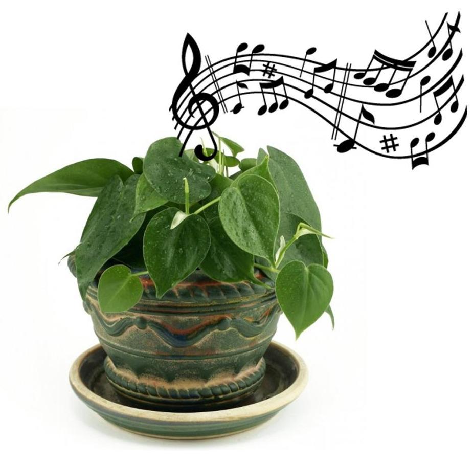 zingende plant